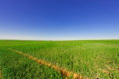 Campo nell'Israele Fotografia Stock