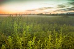 Campo nella nebbia Fotografie Stock