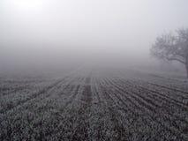 Campo nella nebbia. immagini stock