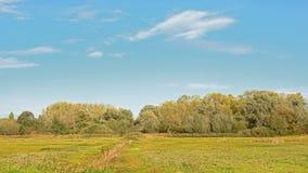 Campo nella palude con la foresta dietro un giorno soleggiato di autunno immagine stock libera da diritti