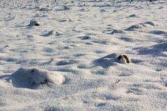 Campo Nevado Foto de archivo