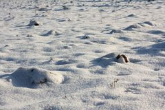 Campo nevado Foto de Stock