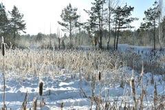 Campo nevado Cuento de hadas del invierno foto de archivo libre de regalías