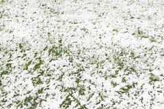 Campo nevado da grama Imagens de Stock Royalty Free