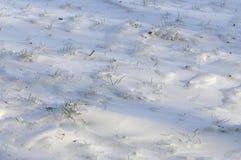 Campo nevicato con i gambi dell'erba verde molto ghiacciati Immagini Stock