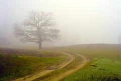 Campo nevoento de uma árvore. imagem de stock
