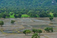 Campo no delta de Mekong, Vietname do sul do arroz Fotos de Stock