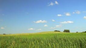 Campo no dia ensolarado Foto de Stock Royalty Free