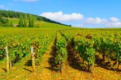 Campo no dOr da costa, Borgonha imagem de stock