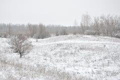 Campo no inverno fotografia de stock