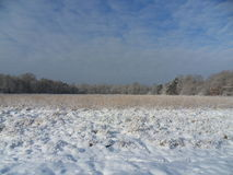 Campo no inverno Imagens de Stock Royalty Free