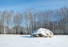 Campo no inverno Paisagem com um monte de feno perto da floresta Fotografia de Stock