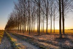 Campo no nascer do sol Imagens de Stock