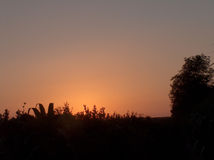 Campo no por do sol Foto de Stock Royalty Free