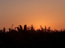 Campo no por do sol fotografia de stock