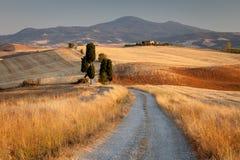 Campo no por do sol, Italy de Tuscan Imagens de Stock