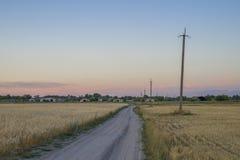 Campo no por do sol que mostra as grões douradas Foto de Stock