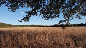 Campo no vale texas cor-de-rosa Imagem de Stock