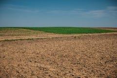 Campo non lavorato con le careggiate in primavera vicino alla terra del grano Struttura della sporcizia con cielo blu Struttura d immagine stock