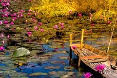 Campo o giardino felice del loto del fiore con la vecchia barca boscosa Fotografie Stock