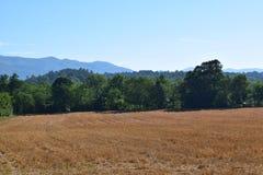 Campo occidentale degli agricoltori di NC del fieno dorato del taglio Fotografie Stock Libere da Diritti