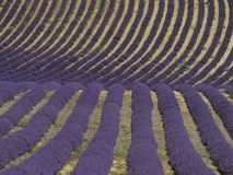 Campo ondulado da alfazema em Sul-França foto de stock