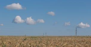 Campo Orecchie del grano cereali Bella vista del giacimento di grano Raccolto di pane Grano, segale Fotografie Stock