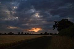 Campo oscuro de la cebada y de los árboles con el cielo tempestuoso Imagen de archivo libre de regalías