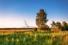 Campo otoñal soleado Imagenes de archivo