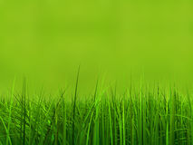Campo ou gramado conceptual de grama do verde 3d no fundo verde Imagem de Stock Royalty Free