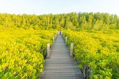 Campo ou Tung Prong Thong dos manguezais de Goldwen fotos de stock