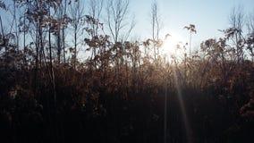 Campo overgrown Fotografía de archivo