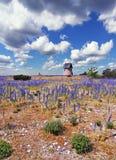 Campo púrpura de la flor Fotografía de archivo libre de regalías