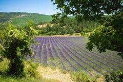 Campo púrpura de la lavanda en Provence Francia Imagen de archivo