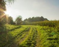 Campo pacífico en luz del sol Foto de archivo libre de regalías