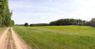 Campo panorâmico do verão Fotos de Stock Royalty Free