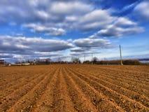 Campo para colheitas Imagens de Stock Royalty Free