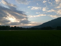 Campo-penombra della risaia Fotografia Stock Libera da Diritti