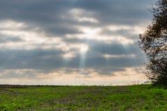 Campo piacevole con l'albero dal lato Fasci visibili da cielo, NIC del sole Fotografia Stock