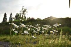 Campo in pieno dei fiori Immagine Stock Libera da Diritti