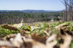 Campo in pieno delle foglie dei morti con Mountain View Fotografia Stock Libera da Diritti