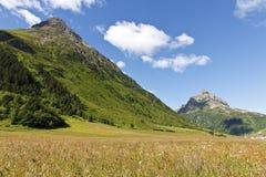 Campo pieno di sole delle alpi Fotografie Stock Libere da Diritti