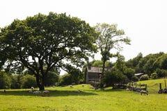 Campo pitoresco Imagens de Stock Royalty Free