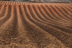 Campo Ploughed Imagens de Stock Royalty Free