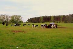 Campo polonês Fotografia de Stock Royalty Free