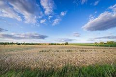 Campo in Polonia Fotografie Stock