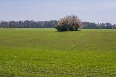 Campo in Polonia Immagini Stock Libere da Diritti