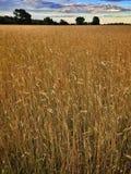 Campo in Polonia Fotografia Stock