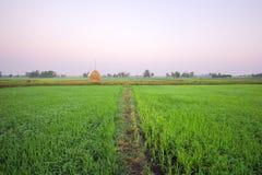 Campo por la mañana, ROI-ed Tailandia del arroz Fotografía de archivo libre de regalías