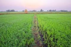 Campo por la mañana, ROI-ed Tailandia del arroz Fotografía de archivo